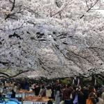 上野公園のお花見で良い場所を取る時間とコツ!マナーやルールは?