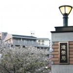 大阪造幣局桜の通り抜けの2017見頃とお花見・夜桜ライトアップ情報