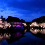 京都平安神宮がライトアップ!紅しだれコンサート2017開催日アクセス方法