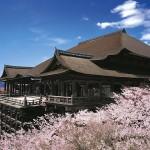清水寺の桜の見頃2017年はいつ?開花予想と夜桜ライトアップ時間・観光情報