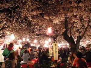 屋台と夜桜