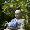 紫陽花寺・鎌倉明月院の2016年あじさいの見頃とアクセス方法