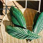 びわの葉エキスの効能や使い方と作り方!やけどやアトピーにも効果的