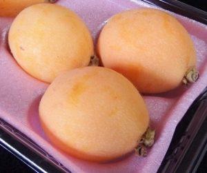 loquat-growplants