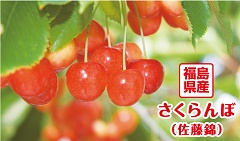 fukusima-cherry picking