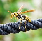 アシナガバチに刺されたら?症状や応急処置と病院の何科に行くか