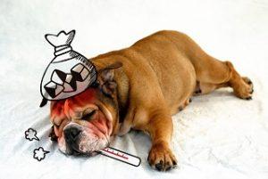 発熱する犬