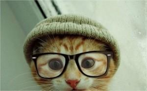 めがねの猫