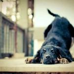 部屋が犬臭い対策!室内犬の体臭と部屋のにおいの消臭方法