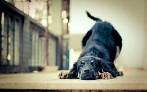 dog_Smell