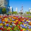 花フェスタ札幌2018の日程と見所は?アクセスと駐車場情報