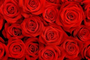 rose-sick