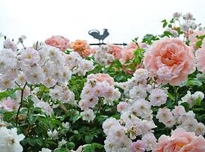風見鳥とバラ
