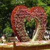 花フェスタ札幌2016の日程と見所は?アクセスと駐車場情報