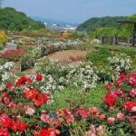花フェスタ記念公園2017のバラまつり春秋の見頃は?割引はある?