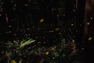firefly-season