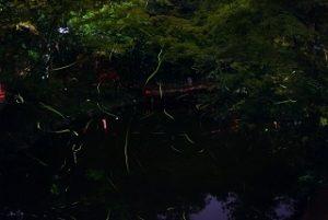 jyokoji-hotaru