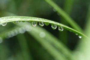 firefly-rain