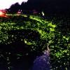 岡山北房ほたる公園2017のホタル鑑賞の見頃と時間は?