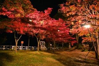 中野もみじ山2016年ライトアップの日程と紅葉の見頃はいつから?