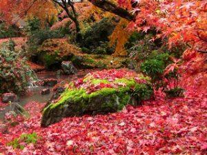 hougonin-autumn-leaves
