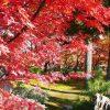 宝厳院の紅葉2016ライトアップと見頃は?秋の特別拝観も
