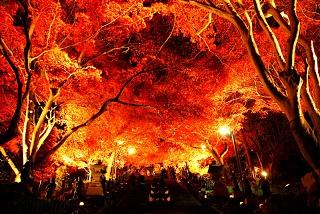 神奈川・大山寺紅葉2016見頃とライトアップ・もみじ祭り日程は?